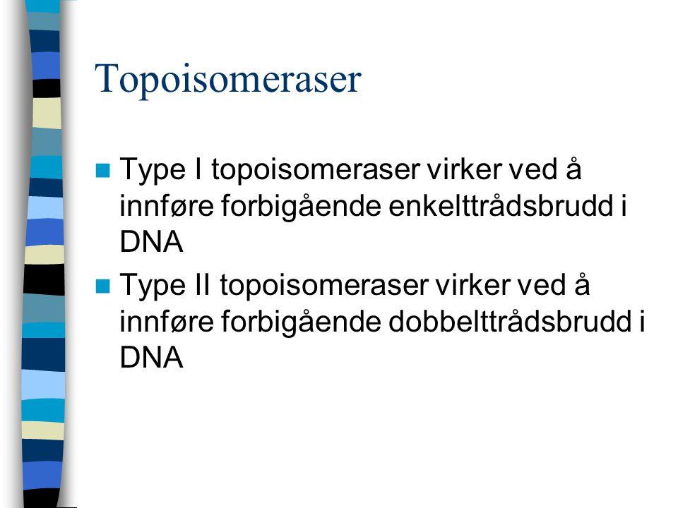 Topoisomeraser Type I topoisomeraser virker ved å innføre forbigående enkelttrådsbrudd i DNA.