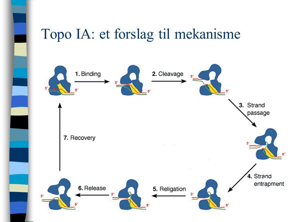 Topo IA: et forslag til mekanisme