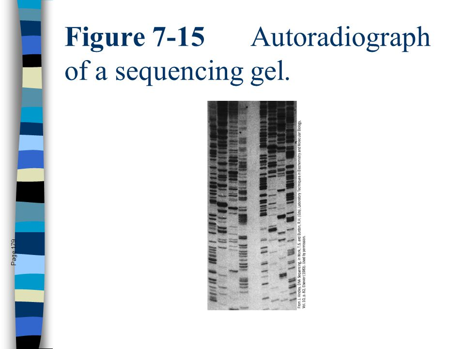 Figure 7-15 Autoradiograph of a sequencing gel.