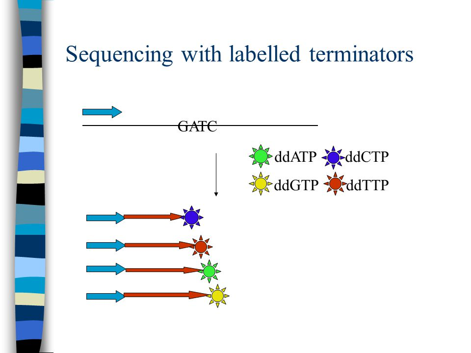 Sequencing with labelled terminators