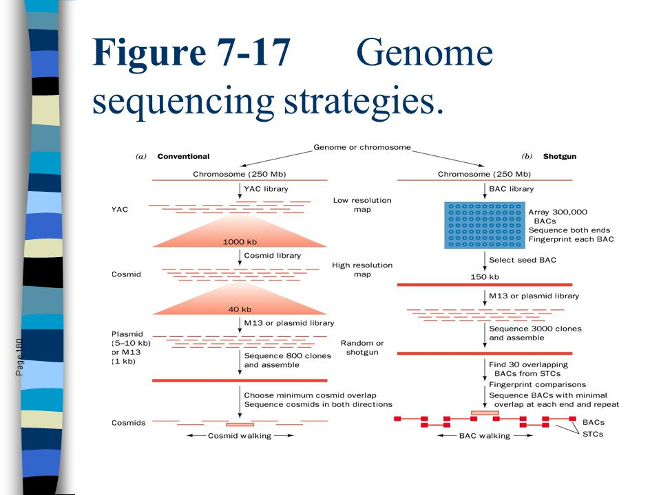 Figure 7-17 Genome sequencing strategies.