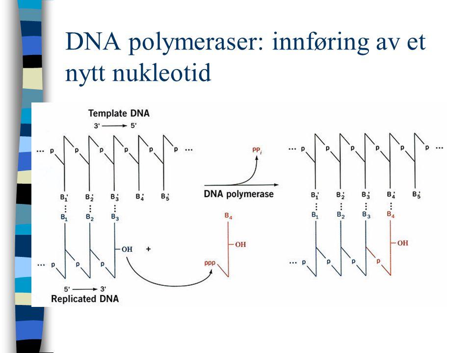 DNA polymeraser: innføring av et nytt nukleotid