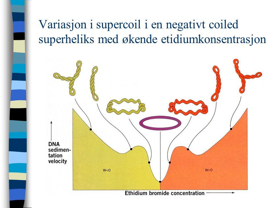 Variasjon i supercoil i en negativt coiled superheliks med økende etidiumkonsentrasjon