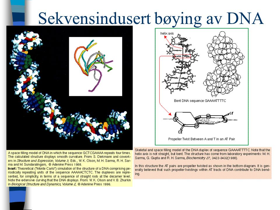 Sekvensindusert bøying av DNA