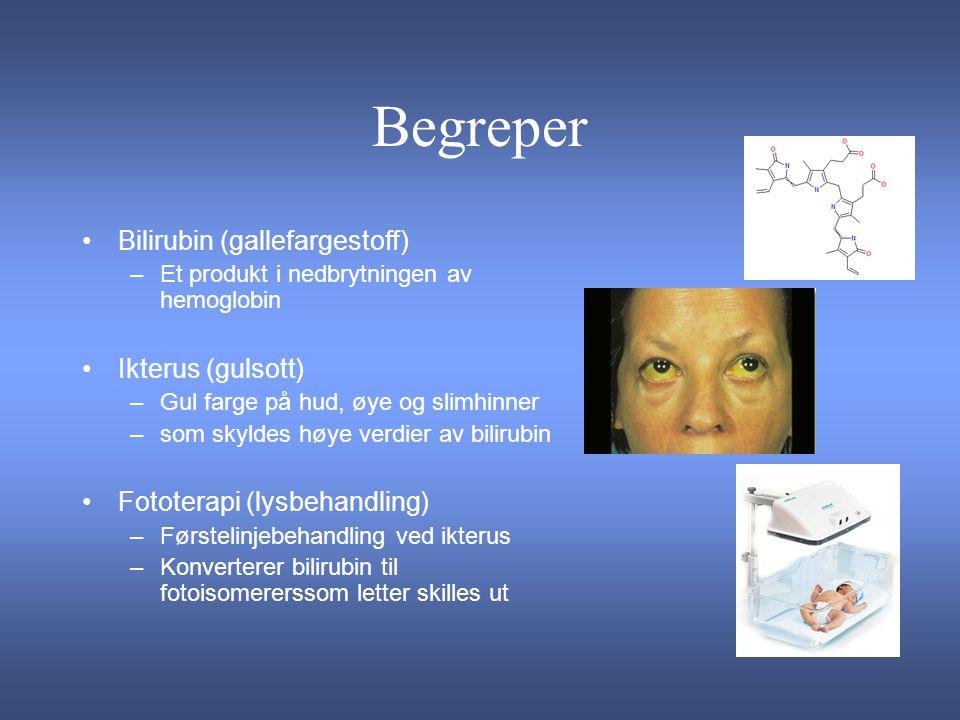 Begreper Bilirubin (gallefargestoff) Ikterus (gulsott)