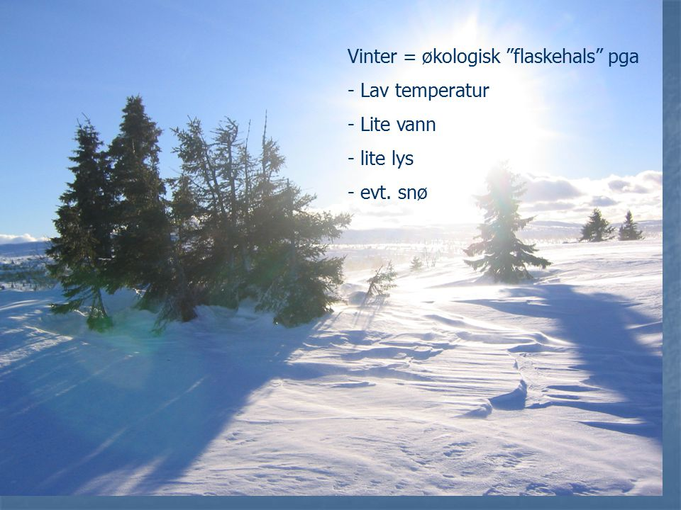 Vinter = økologisk flaskehals pga