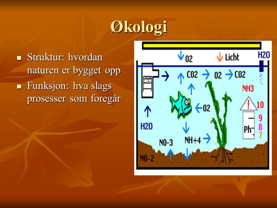 Økologi Struktur: hvordan naturen er bygget opp