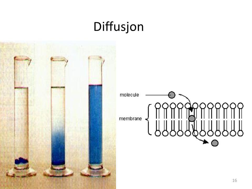 Diffusjon Diffusjon SKRIV PÅ TAVLA: bevegelse og spredning av atomer, molekyler eller ioner til det er oppnådd en jevn fordeling av stoffene.