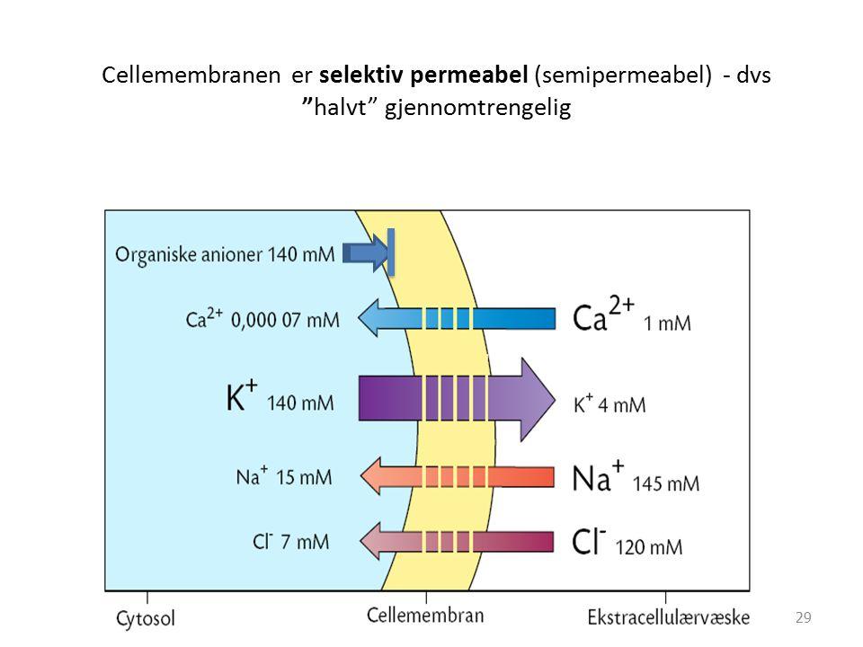 Cellemembranen er selektiv permeabel (semipermeabel) - dvs halvt gjennomtrengelig