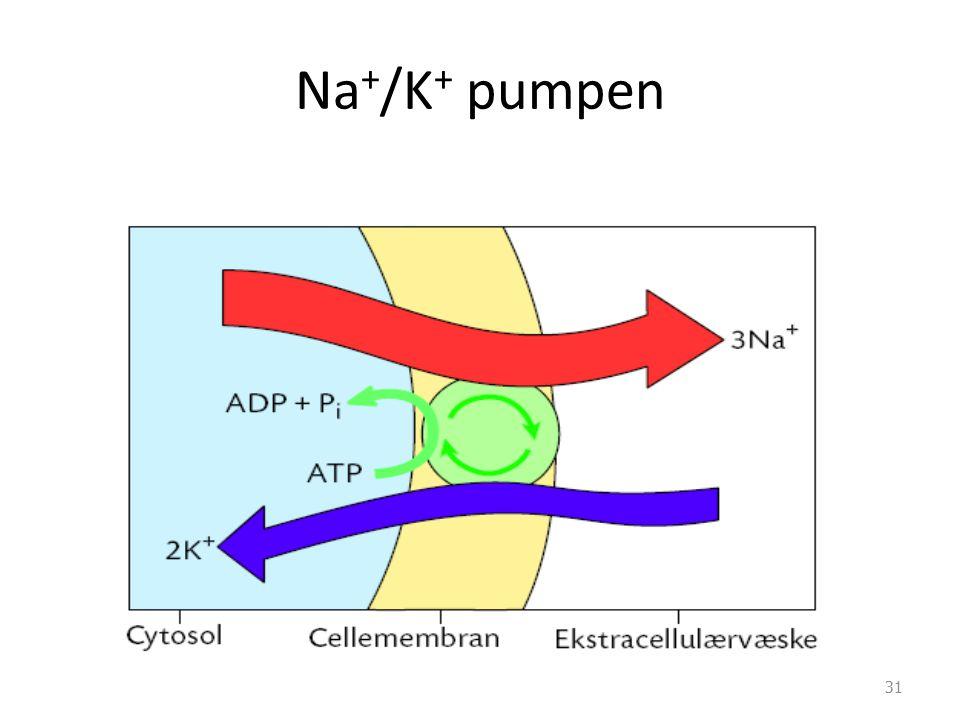 Na+/K+ pumpen Merk at dette er en aktiv transportmekanisme og uten energi så ødelegges membranpotensialet og cellen dør…………..