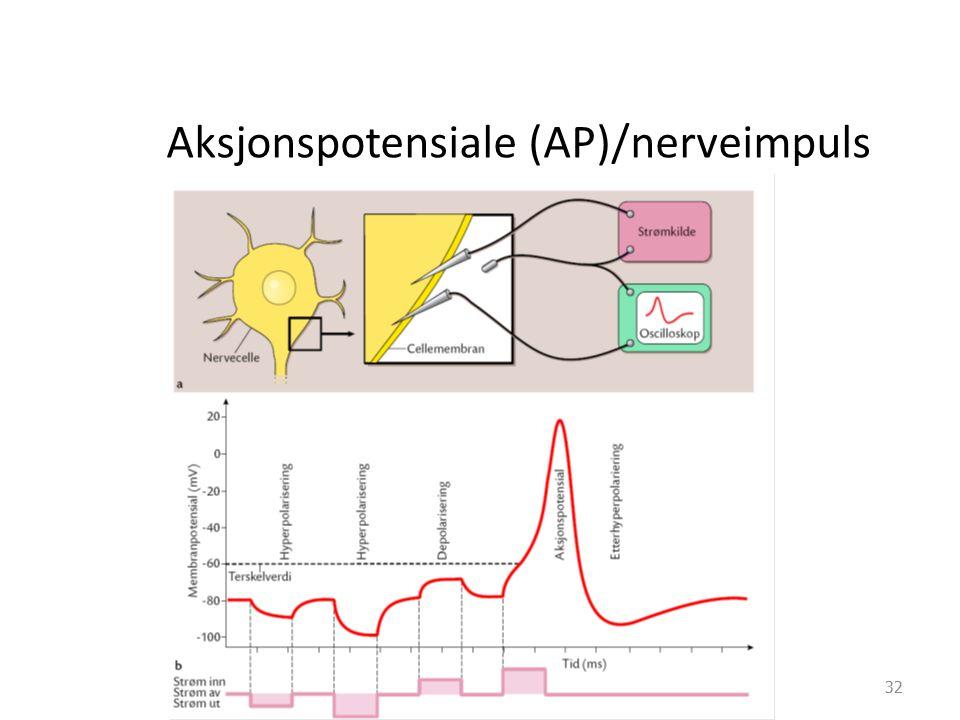 Aksjonspotensiale (AP)/nerveimpuls