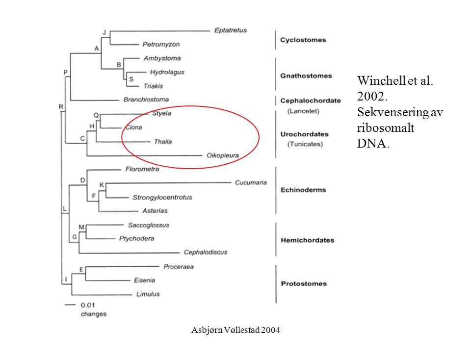 Winchell et al. 2002. Sekvensering av ribosomalt DNA.