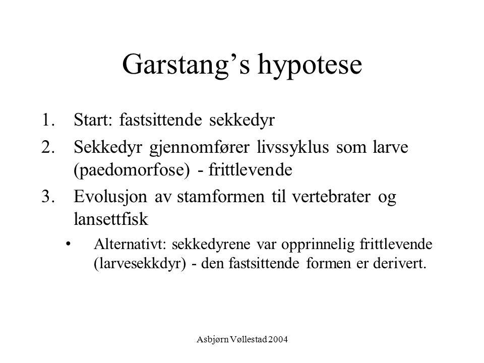 Garstang's hypotese Start: fastsittende sekkedyr