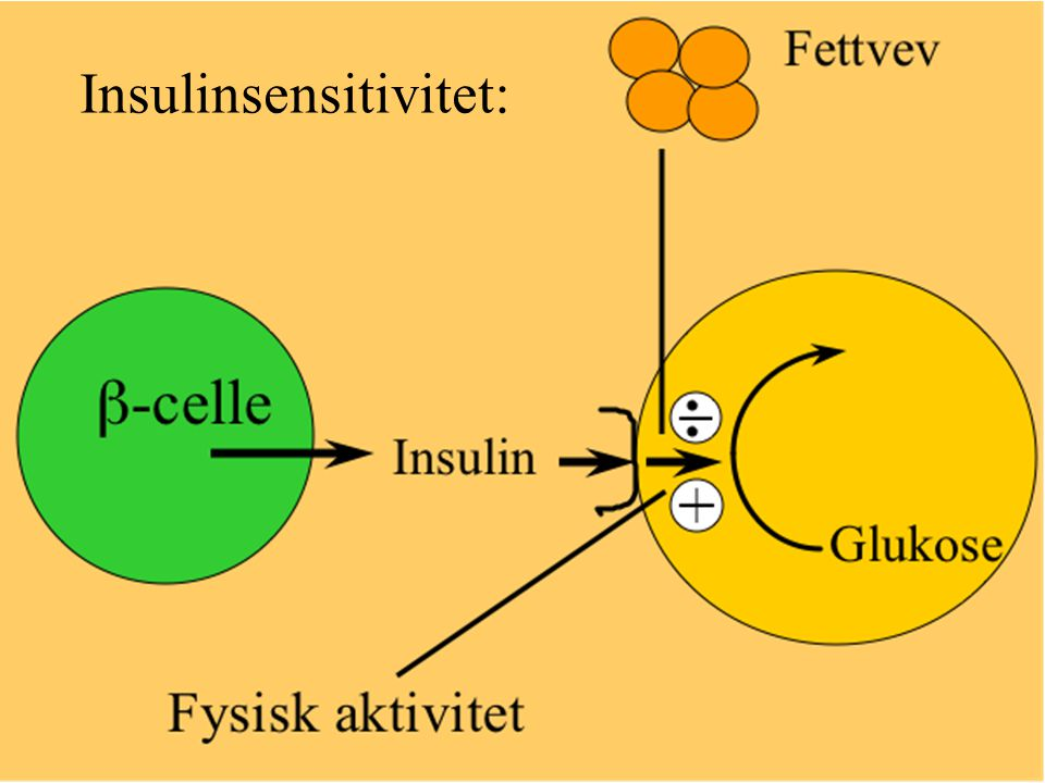 Insulinsensitivitet: