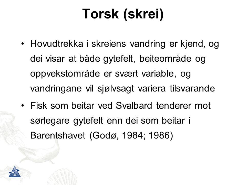 Torsk (skrei)