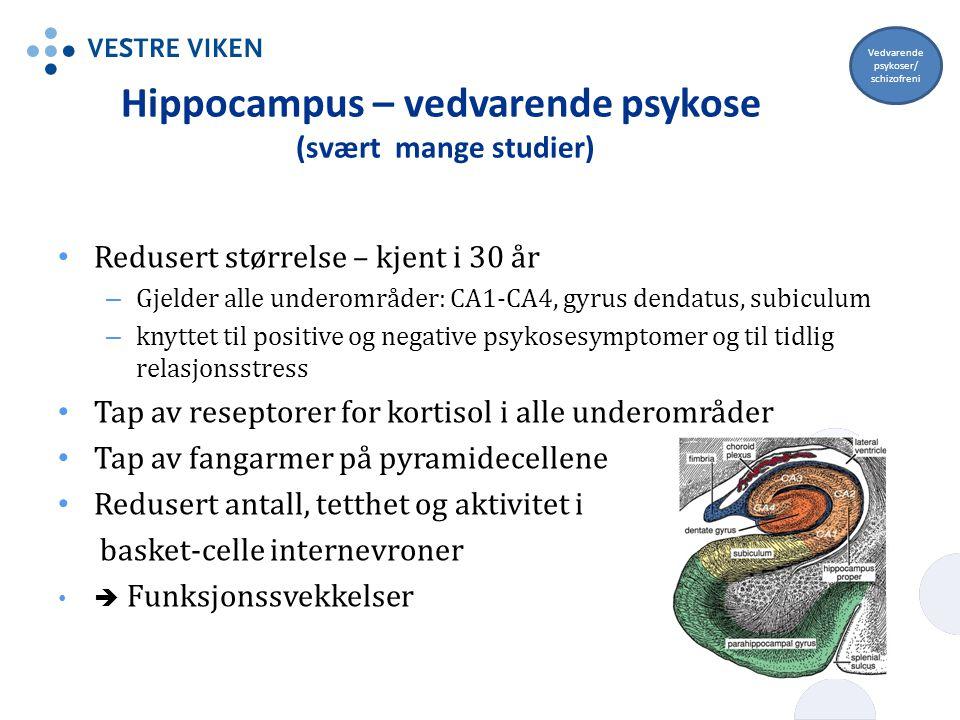 Hippocampus – vedvarende psykose (svært mange studier)