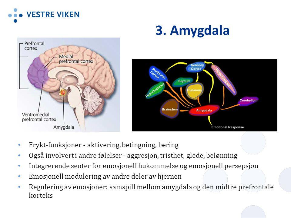 3. Amygdala Frykt-funksjoner - aktivering, betingning, læring