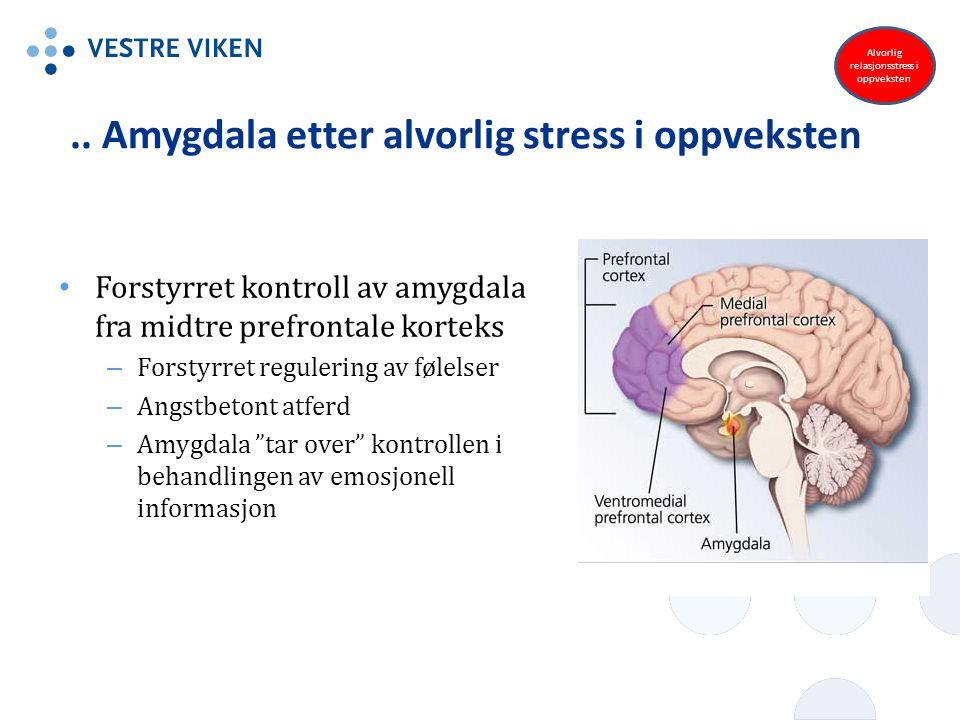 .. Amygdala etter alvorlig stress i oppveksten