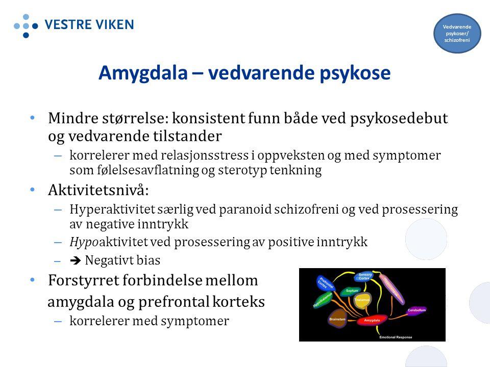 Amygdala – vedvarende psykose