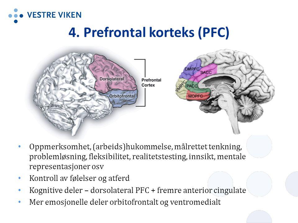 4. Prefrontal korteks (PFC)