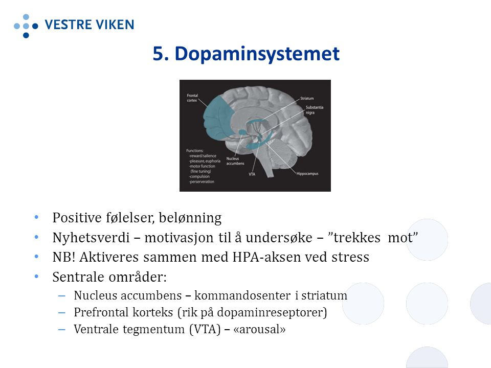 5. Dopaminsystemet Positive følelser, belønning