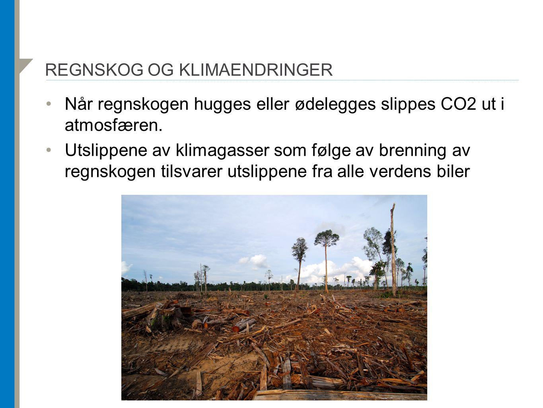 Regnskog og klimaendringer
