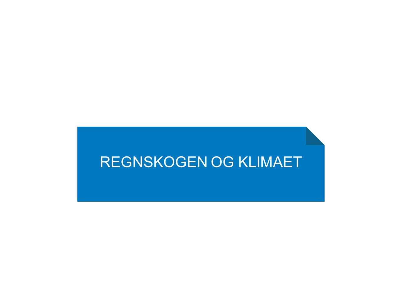 Regnskogen og klimaet