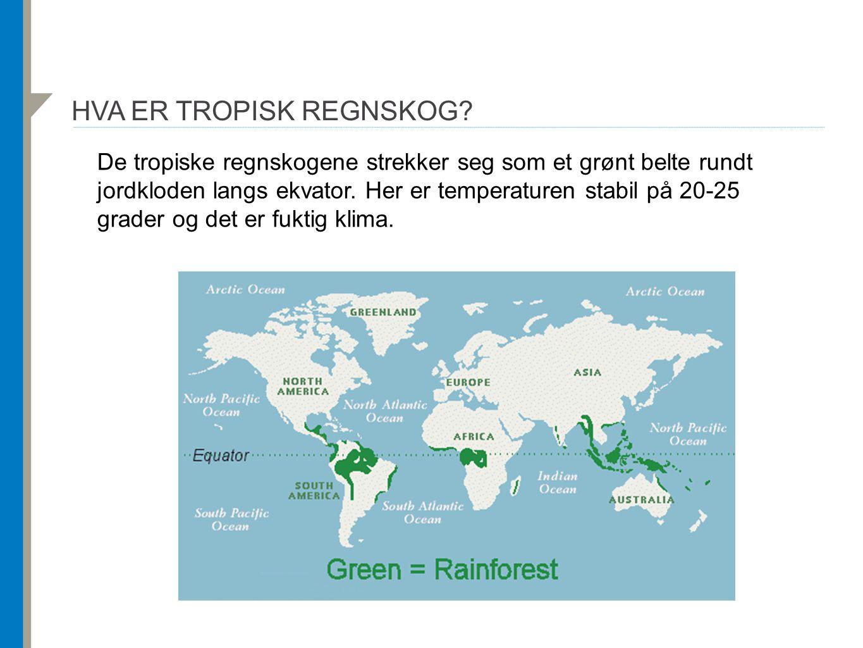 Hva er tropisk regnskog