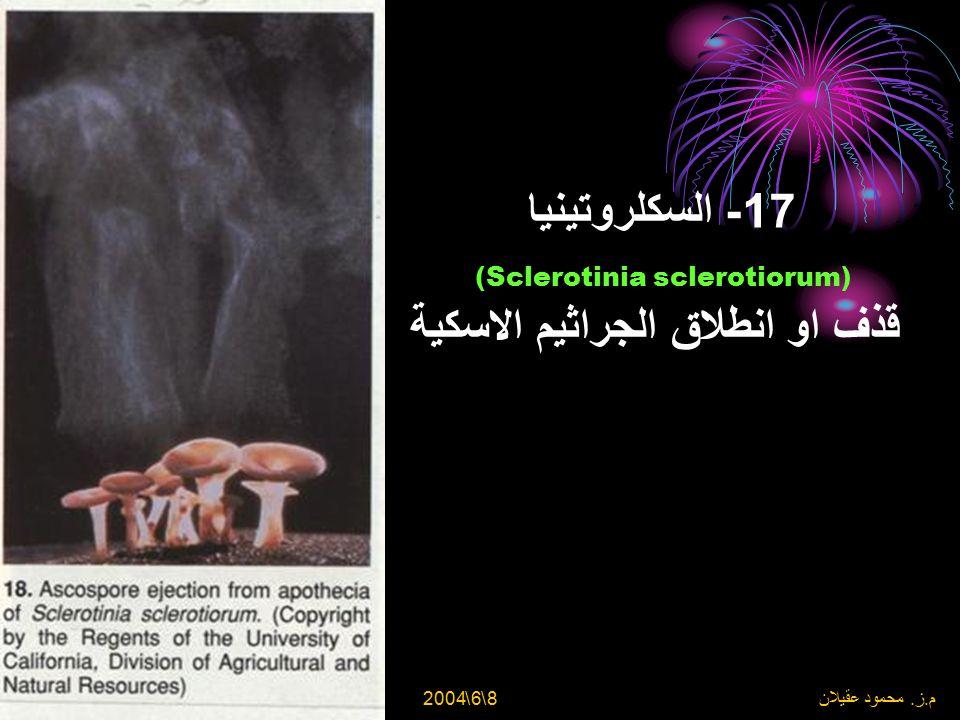 17- السكلروتينيا (Sclerotinia sclerotiorum) قذف او انطلاق الجراثيم الاسكية