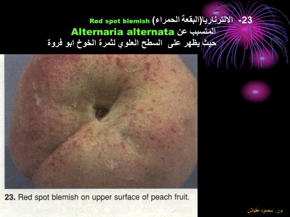 23- الالترناريا(البقعة الحمراء) Red spot blemish المتسبب عن Alternaria alternata حيث يظهر على السطح العلوي لثمرة الخوخ ابو فروة
