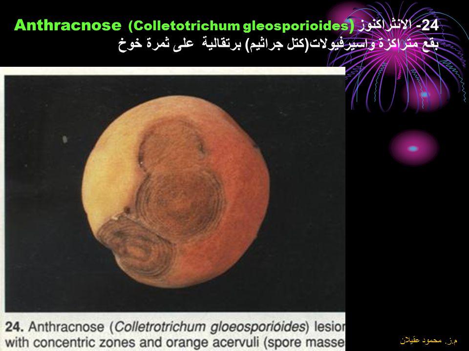 24- الانثراكنوز Anthracnose (Colletotrichum gleosporioides) بقع متراكزة واسيرفيولات(كتل جراثيم) برتقالية على ثمرة خوخ
