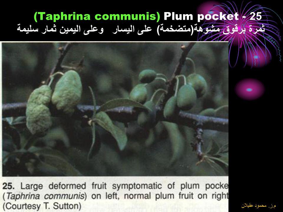 25Plum pocket - (Taphrina communis) ثمرة برقوق مشوهة(متضخمة) على اليسار وعلى اليمين ثمار سليمة