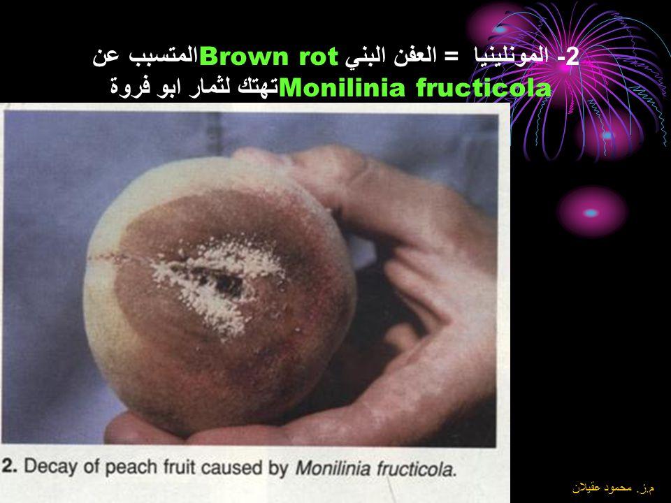 2- المونلينيا = العفن البني Brown rotالمتسبب عن Monilinia fructicola تهتك لثمار ابو فروة