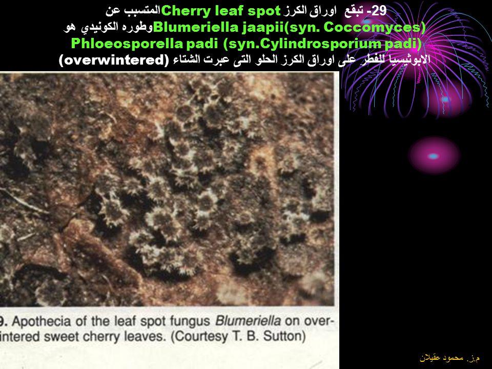 29- تبقع اوراق الكرز Cherry leaf spotالمتسبب عن Blumeriella jaapii(syn