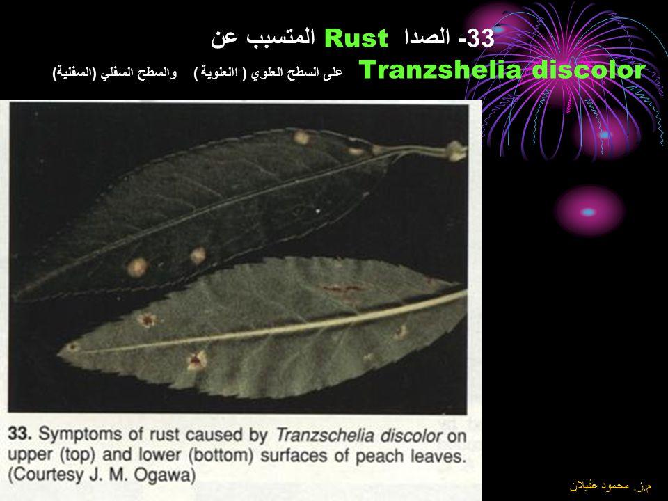 33- الصدا Rust المتسبب عن Tranzshelia discolor على السطح العلوي ( االعلوية ) والسطح السفلي (السفلية)