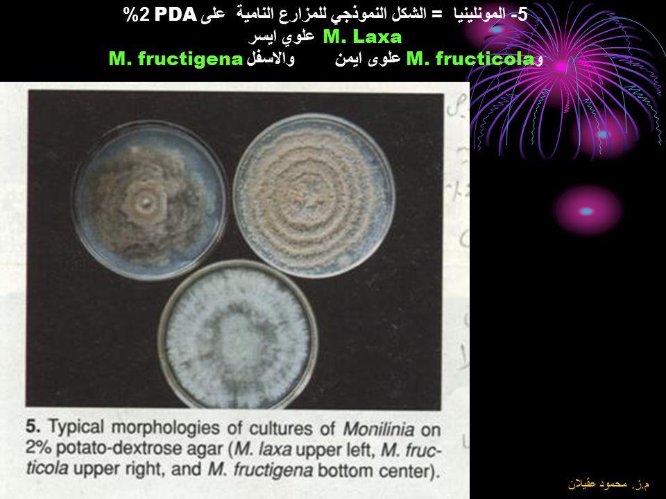 5- المونلينيا = الشكل النموذجي للمزارع النامية على PDA 2% M