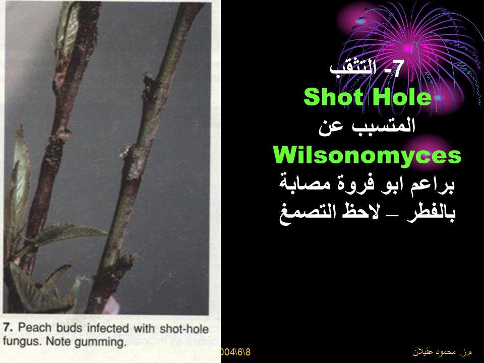 7- التثقب Shot Hole المتسبب عن Wilsonomyces براعم ابو فروة مصابة بالفطر – لاحظ التصمغ