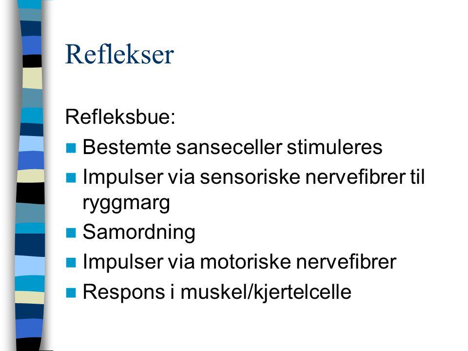 Reflekser Refleksbue: Bestemte sanseceller stimuleres