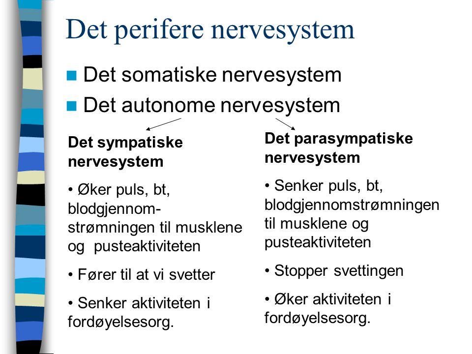 Det perifere nervesystem