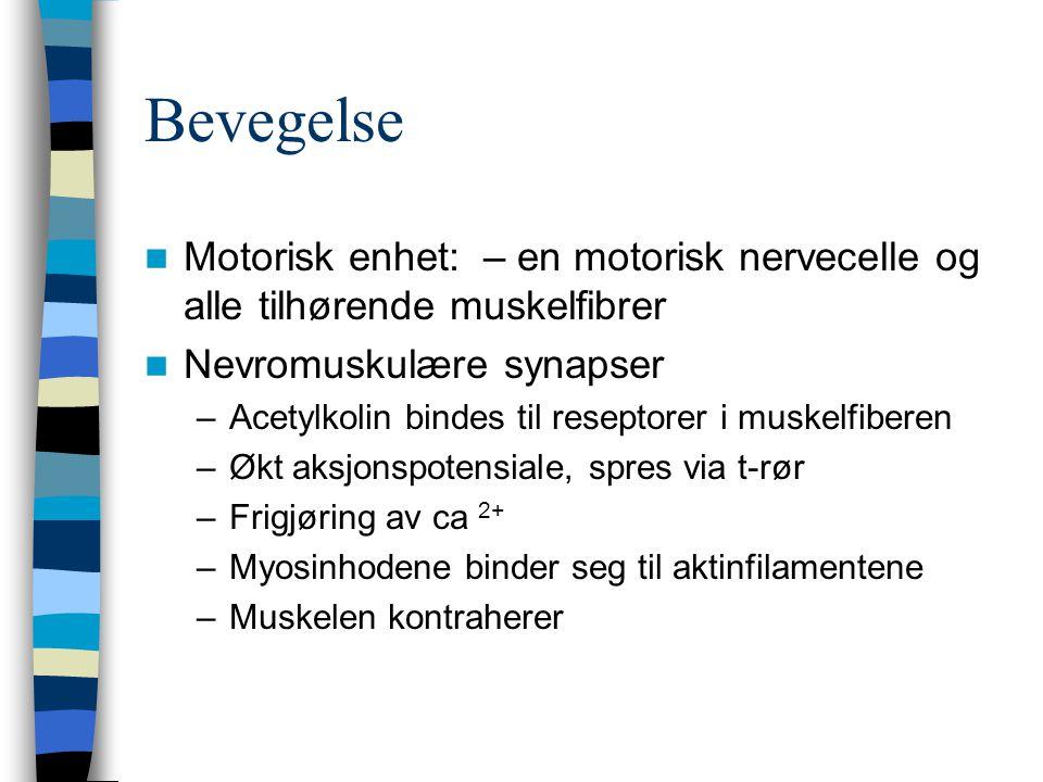 Bevegelse Motorisk enhet: – en motorisk nervecelle og alle tilhørende muskelfibrer. Nevromuskulære synapser.