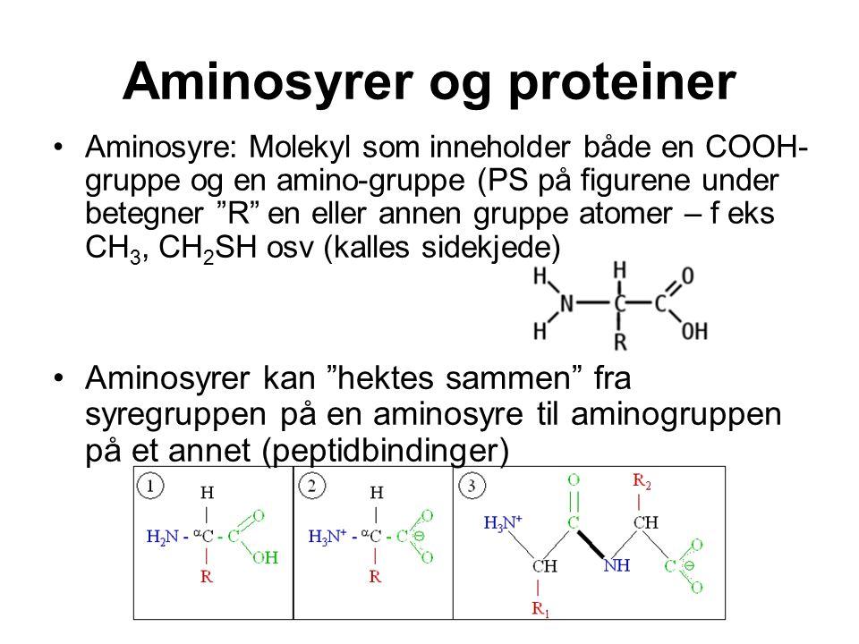 Aminosyrer og proteiner