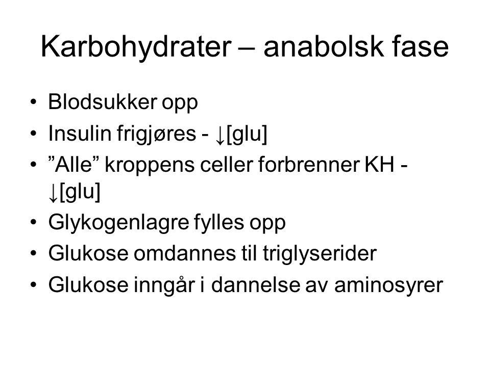 Karbohydrater – anabolsk fase