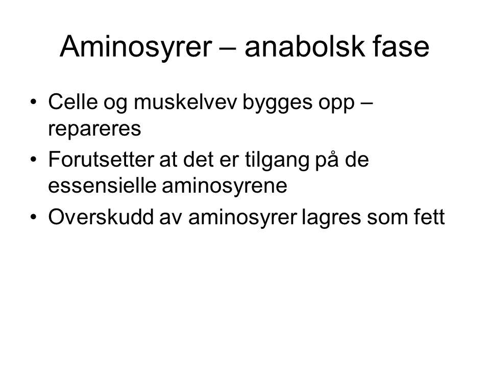 Aminosyrer – anabolsk fase