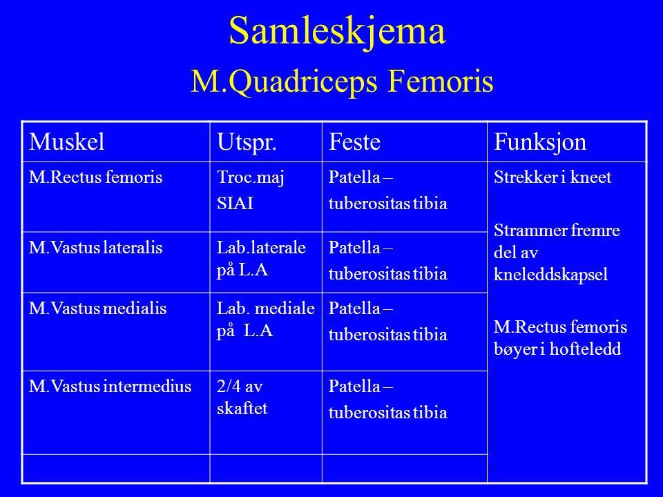 Samleskjema M.Quadriceps Femoris