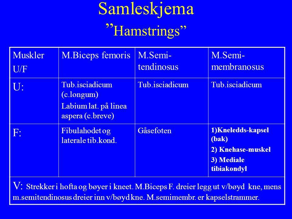 Samleskjema Hamstrings