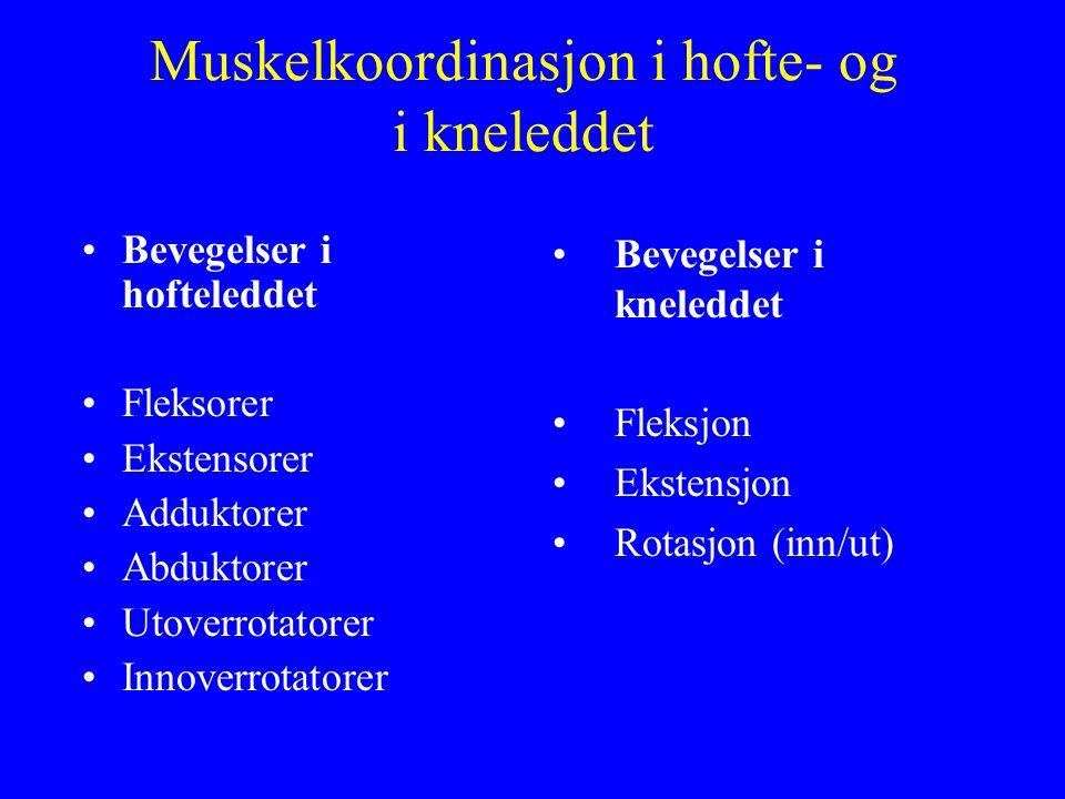 Muskelkoordinasjon i hofte- og i kneleddet