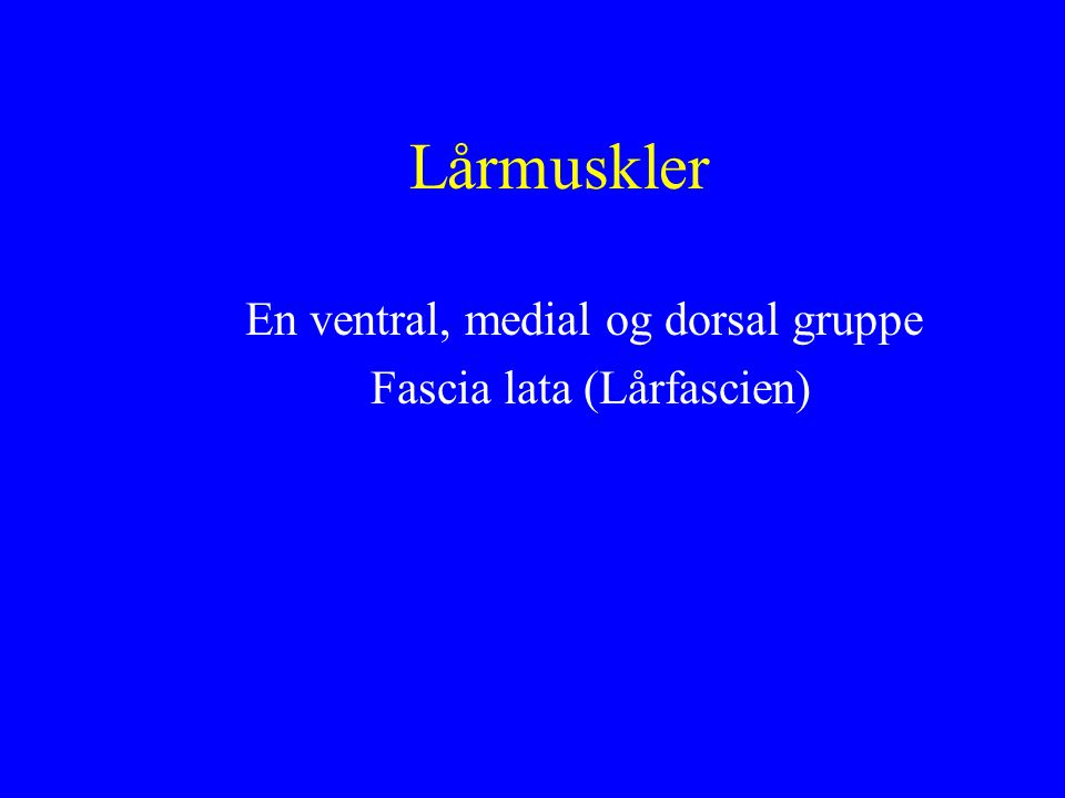 En ventral, medial og dorsal gruppe Fascia lata (Lårfascien)
