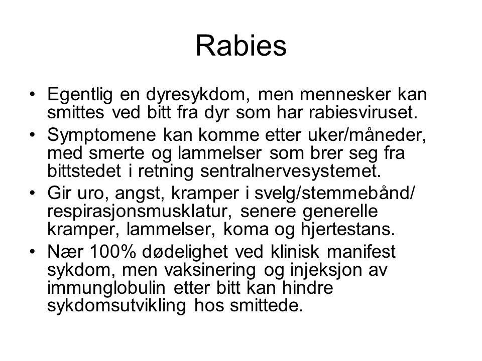 Rabies Egentlig en dyresykdom, men mennesker kan smittes ved bitt fra dyr som har rabiesviruset.