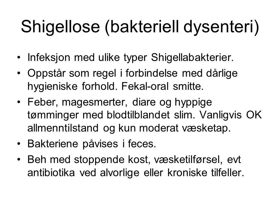 Shigellose (bakteriell dysenteri)