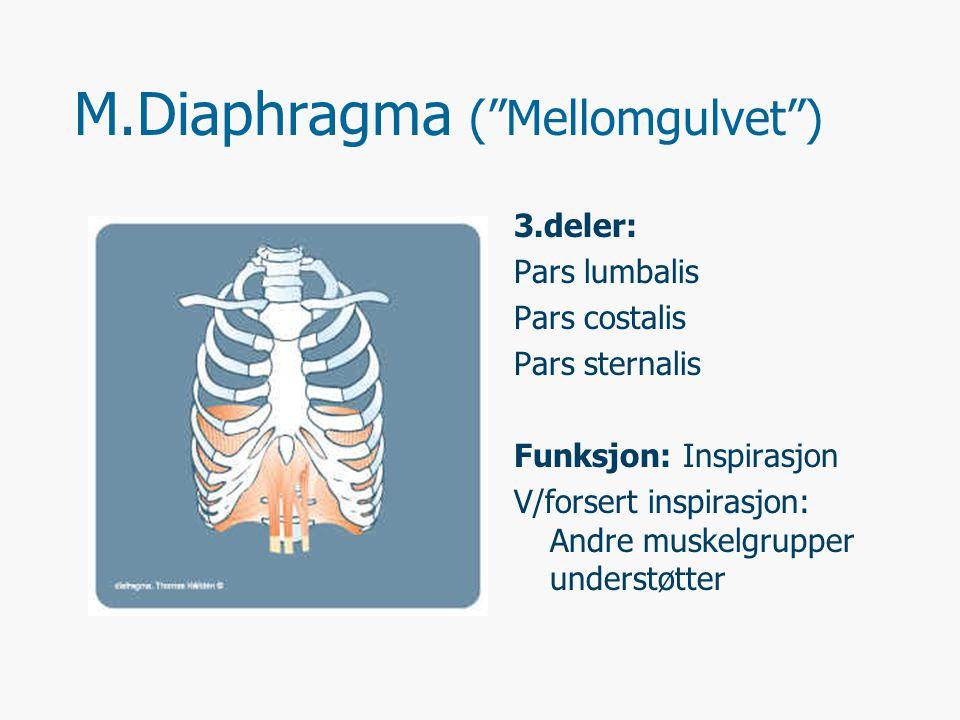 M.Diaphragma ( Mellomgulvet )